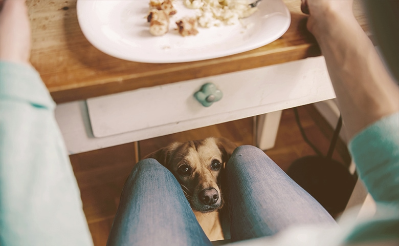 dog looking at onwer for scraps