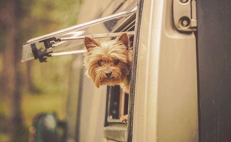 dog looking through a rv window