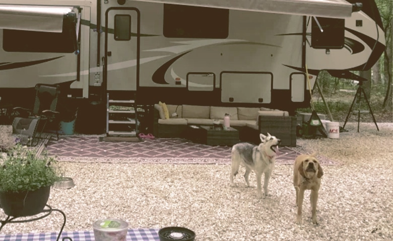 dogs outside next to rv