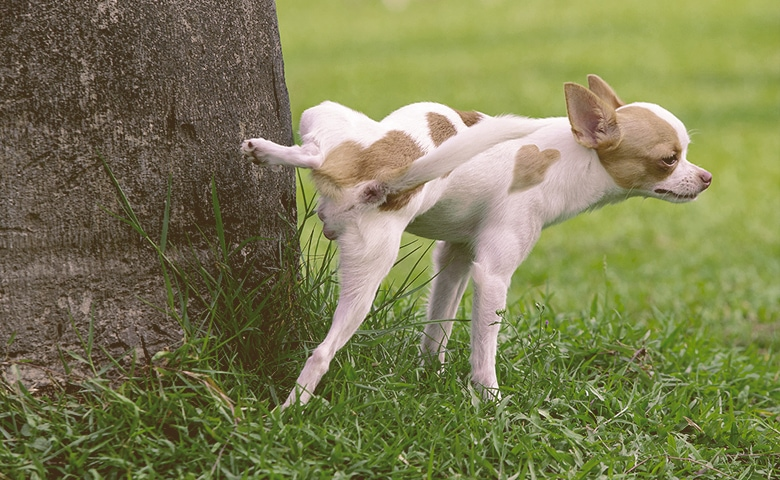 dog peeing into a tree