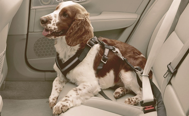 dog with seatbelt