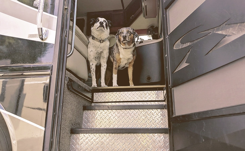 dogs at the entrance of the rv