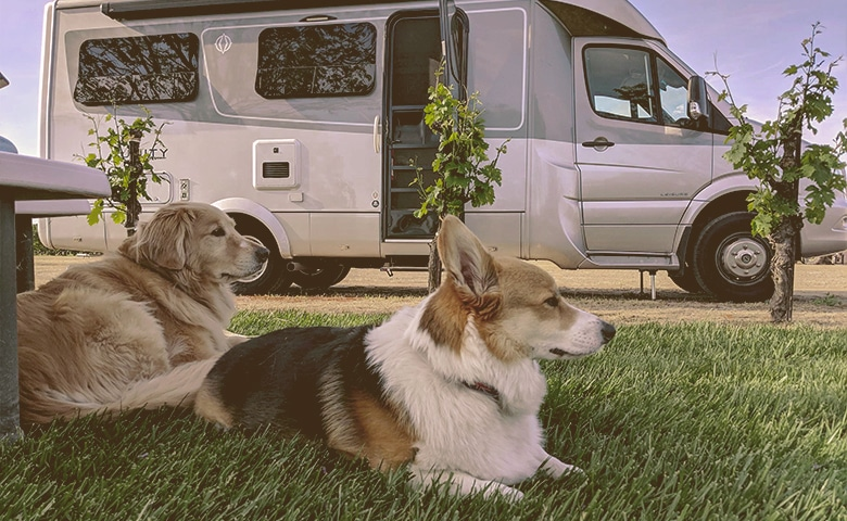 dogs laying down by RV