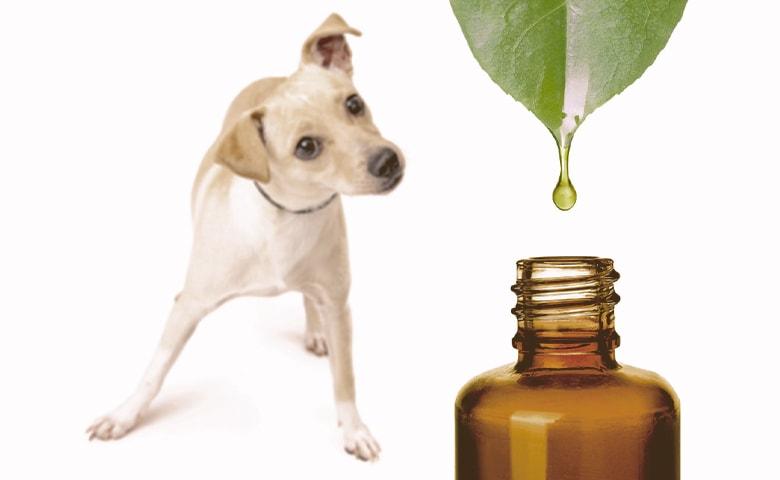 essential oils and dog