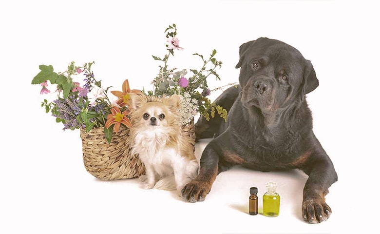essential oils and dogs