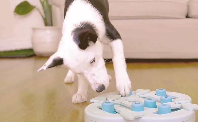 Dog with his Puzzle Toy