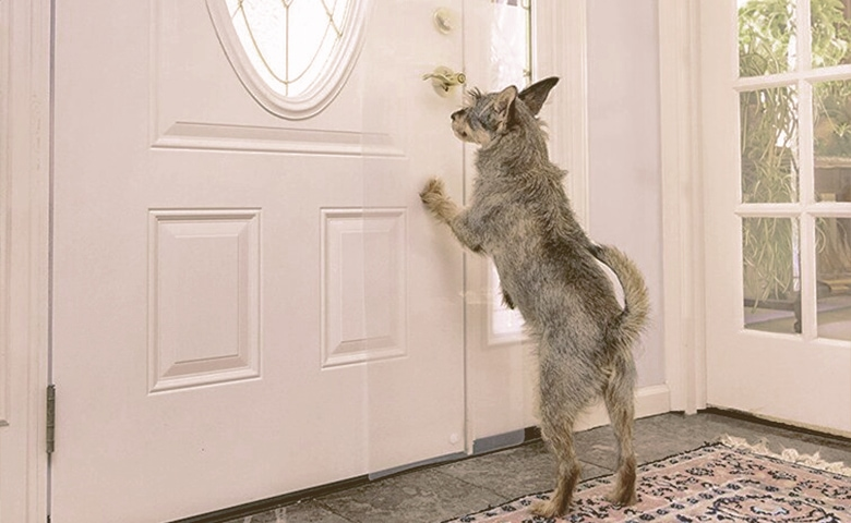 dog scratch shield