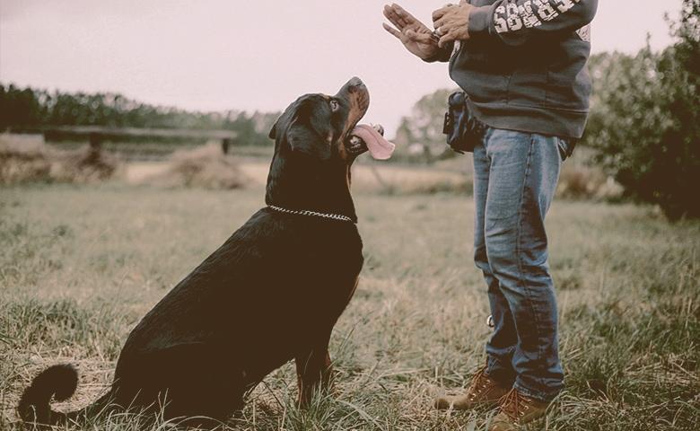 old dog training