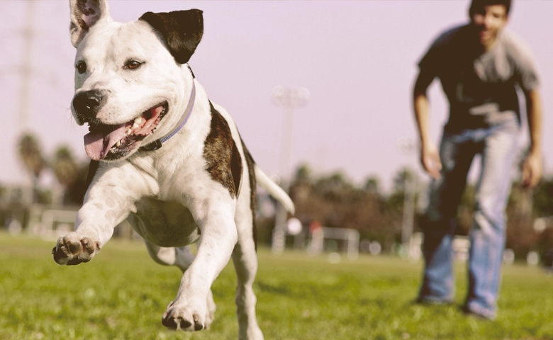High-energy dog.