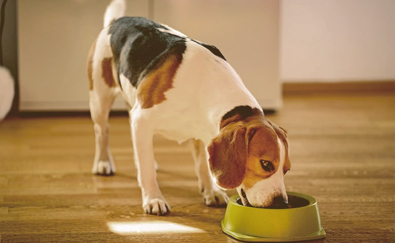 Dog eating from bowl on kitchen floor